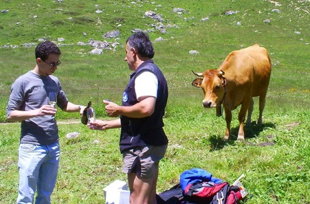 Hiking in the Alps with Oenology hilking in the mountain with wien tasting, hiking in the alpine pastures with wine tasting, hiking and wine tasting in a herd of local cows, Hiking i